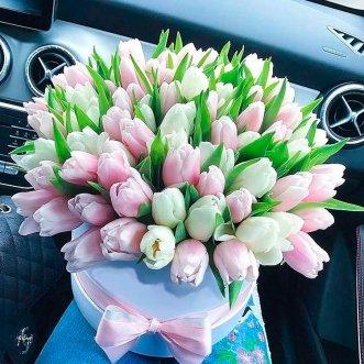 101 белый и розовый тюльпан